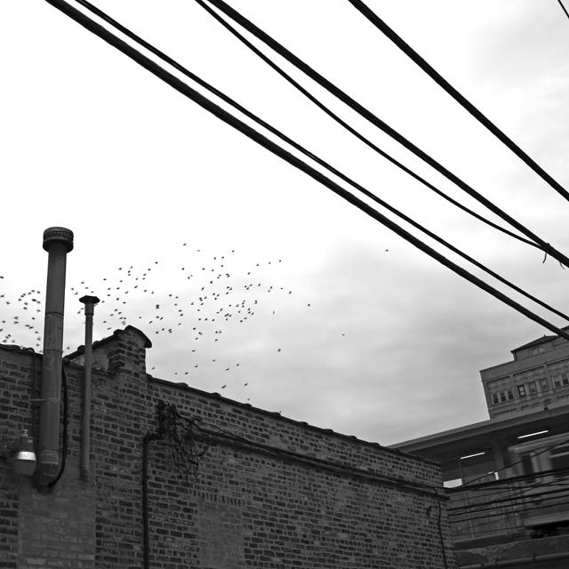 http://stevetwardowski.com/files/gimgs/10_birdssml.jpg