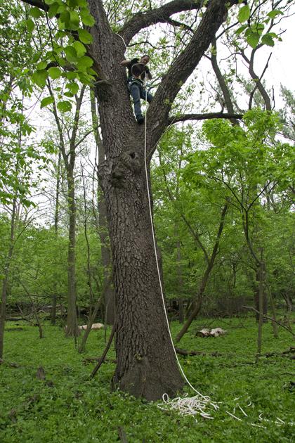 http://stevetwardowski.com/files/gimgs/6_treemansml.jpg