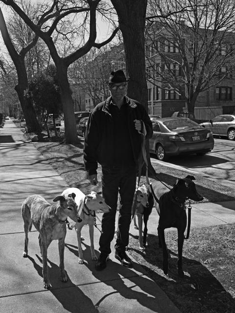 http://stevetwardowski.com/files/gimgs/9_greyhounddogsml.jpg